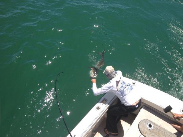 Carolina sunrise nc inshore fishing specialist 11 16 for Harkers island fishing report